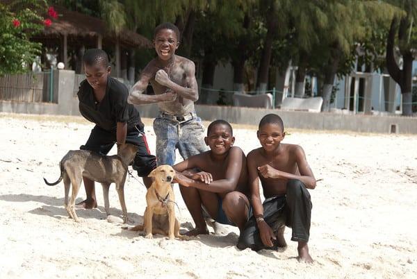 Feral Dogs in Pemba