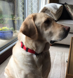 Ollie Ann Jacksons Dog